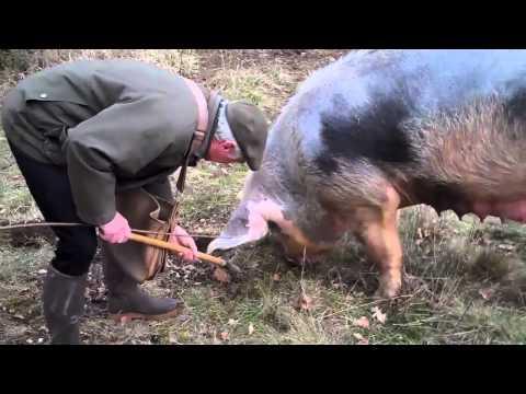 Agriculture : portrait d'une éleveuse passionnéede YouTube · Durée:  2 minutes 30 secondes