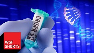 A Brief History of Gene Editing