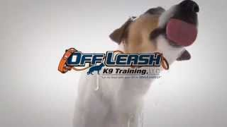 Jack Russell Trains With Top Rated Dog Trainers Off Leash K9 Training, Columbia
