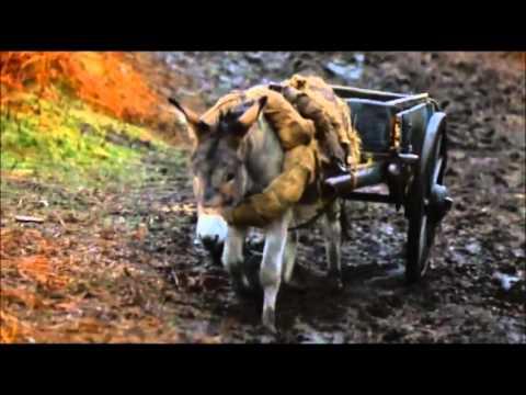 Animal Farm (1999) - All songs - YouTube