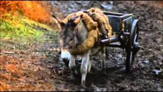 Animal Farm (1999) - All songs