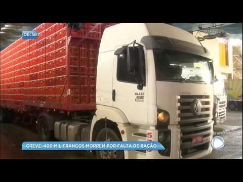 Com greve, 400 mil frangos morrem por falta de ração