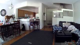 #CaughtonDropcam: What your dog does while you