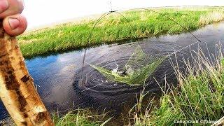 Рыбалка на паук.Подъёмник в микроречке. За Сибирскими дикими сазанами.