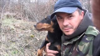Охота на лису норная! С ягдтерьером. Hunting foxes, with Jagdterrier
