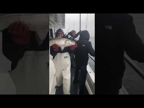 Captain Lou Fleet STARSTREAM VIII:  Long Island Striped Bass Fishing 11/20/2018