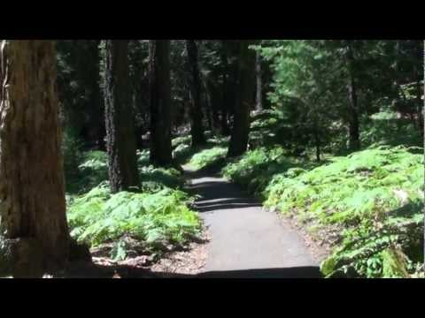 Sequoia National Park Camping Trip