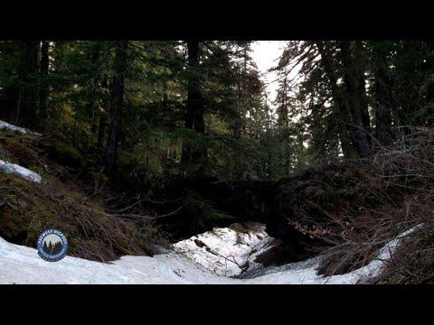 Natural Bridges And A Clan Of Bigfoot – Man Encounters Multiple Bigfoot In Washington State!