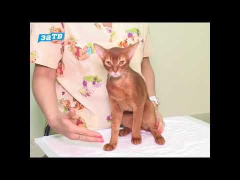 Как вывести лишай у кошки - Советы