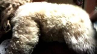 animal porno