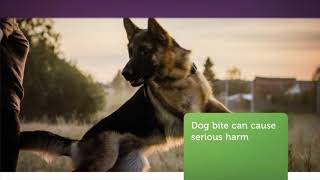 OceanBridge Law Firm : Dog Bite Attorney in Van Nuys, CA