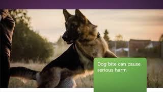 OceanBridge Law Firm : Dog Bite Attorney in Van Nuys, CA