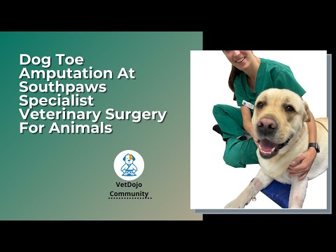 Dog Toe Amputation At Southpaws Specialist Veterinary Surgery For Animals