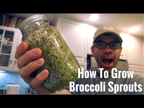 How To Make Broccoli Sprouts | Superfood-Cancer Fighting-Detoxing Microgreens | Cog Hill Farm