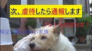 8:家族のわんこ(老犬)についてご意見ください。