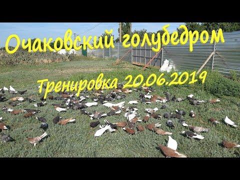 Очаковский голубедром. Тренировка голубей 20.06.2019