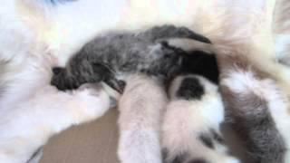 Gambar cover Bayi Kucing Umur 2 minggu
