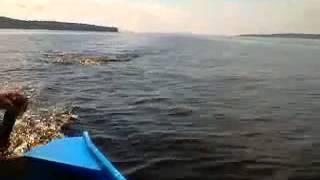 Cobra grande perseguindo barco