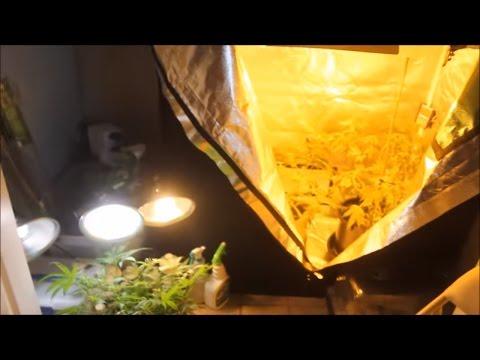 1000 watt grow tent setup