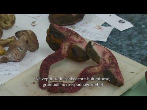 Габите во Македонија (Fungi of Macedonia)