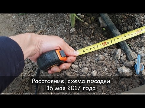 Расстояние, схема посадки, 16 мая 2017 года | выращивание | гарант | томат | схема | сашер | посев | агро | биг
