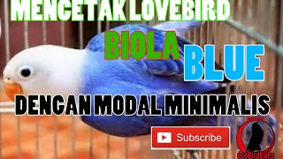 Video CARA MENCETAK LOVEBIRD BIOLA BLUE / How to Breeding Lovebird Opaline Blue #TipsBreeding download MP3, 3GP, MP4, WEBM, AVI, FLV Juli 2018