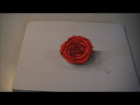 Dibujando Una Rosa Realista Usando Colores De Madera Time Lapse