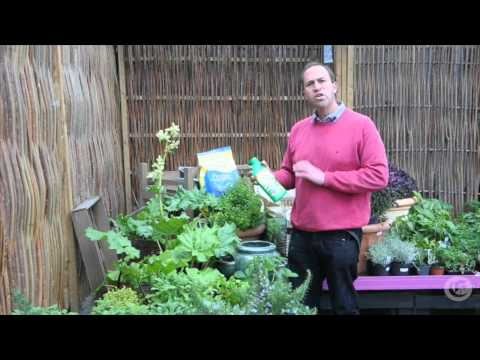 Gardening with Peter Dowdall