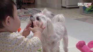 개나 고양이를 키운다면 꼭 봐야될 영상 3 ㅣ What Do I Do If The Pet Dog Or Cat Attacks The Baby...?