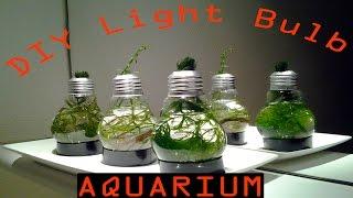 diy light bulb aquarium