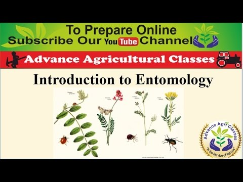 Introduction to Entomology part - 1 (Hindi/English) Agricultural Field Officer IBPS
