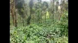 1 or 2 Acres Coffee Estate For Sale Call 9590090009 in sakleshpura