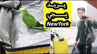 سافرت نيويورك ل استلام سيارتي الجديدة وميزو دخل لجنطة السفر..