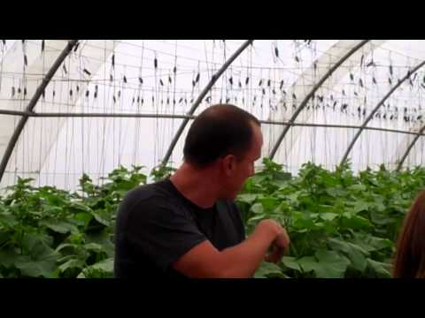 Living Way Ministries Organic Garden, Cape Town, South Africa