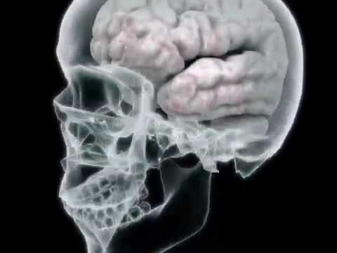 Your Brain on Drugs - Hydrocodone