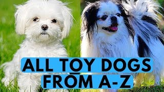All Toy Dog Breeds List (from A to Z)