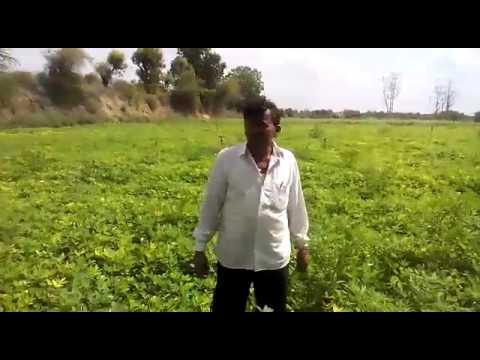 Lbr marketing ltd agriculture products result