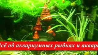 Рыбок.НЕТ - Всё об аквариумных рыбках и аквариумах.