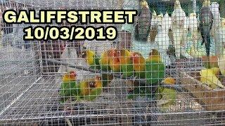 All Birds Price In Kolkatas Best Bird And Pet Market Galiffstreet 10/03/2019 Full HD