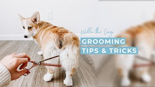 How to Groom Your Dog at Home | Grooming At Home During COVID 19