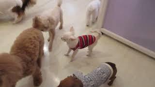 犬の保育園プレセアについてはコチラから!! http://presea-dog.com/