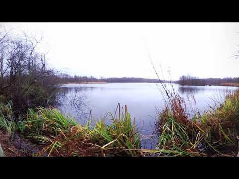 Bird Hide in Bure Marshes - Horning, Norfolk Broads, UK
