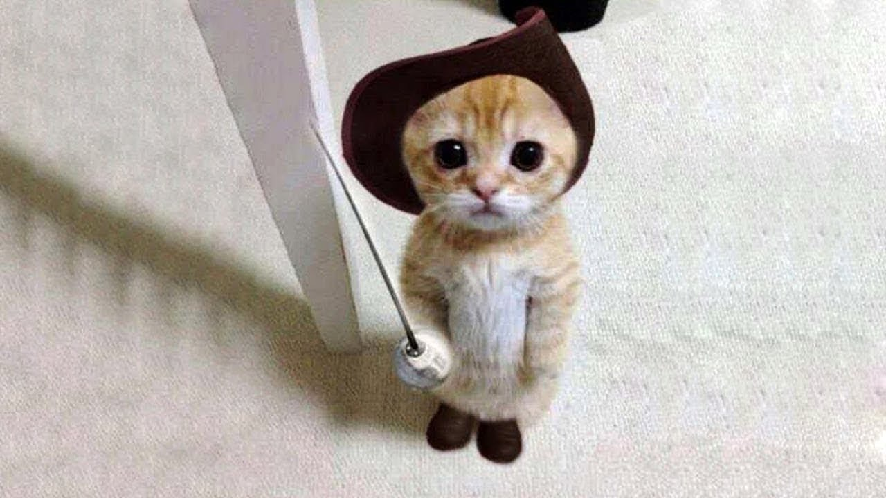 super cute cats compilation