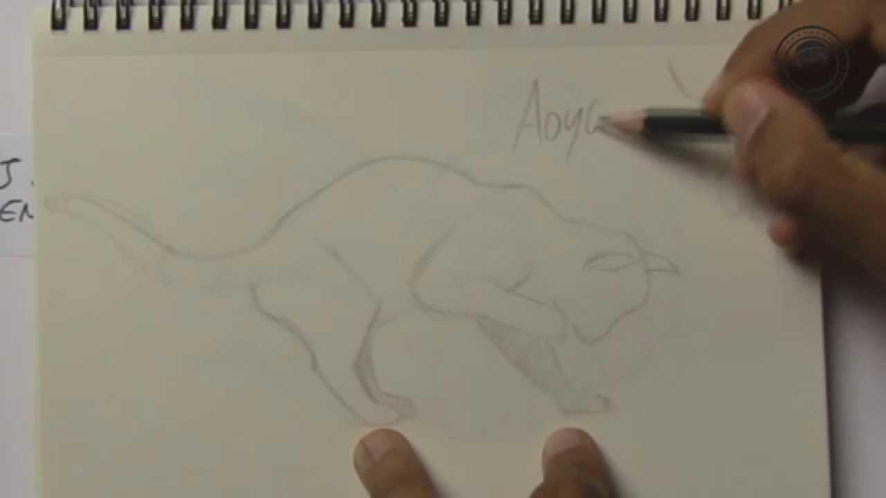 3 principes pour dessiner un animal en mouvement 30 - Animal a dessiner ...