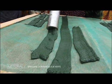 Spiruline la bonne algue verte