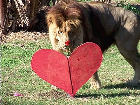 ♥ Big Cat Love ♥