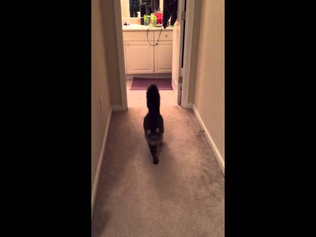 Cute Cat loves to hear her name called