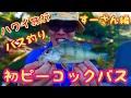 [ハワイ旅行でバス釣り]スーさん初のピーコックバスを狙う![ウィルソン湖スーさん編]