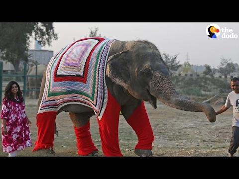 Rescue Elephants Get Huge Sweaters