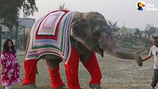 Rescue Elephants Get Huge Sweaters   The Dodo